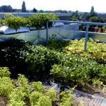 giardino_pensile_come_fare_creare_realizzare_giardino_pensile_tetto_verde_coltivare_verdura_sul_tetto_giardini_pensili_tetti_verdi_6
